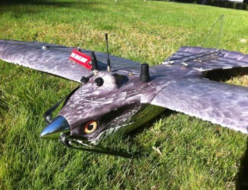 Noticias sobre recientes Bird Strikes. Nuestra cetrería robótica lo evitaría.